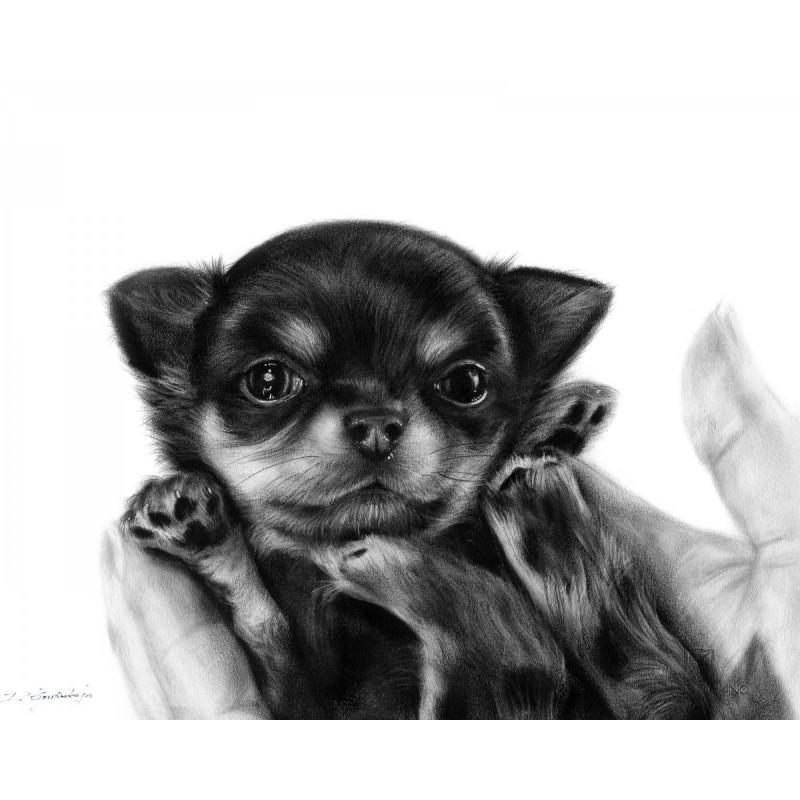 Chihuahua Puppy Turro