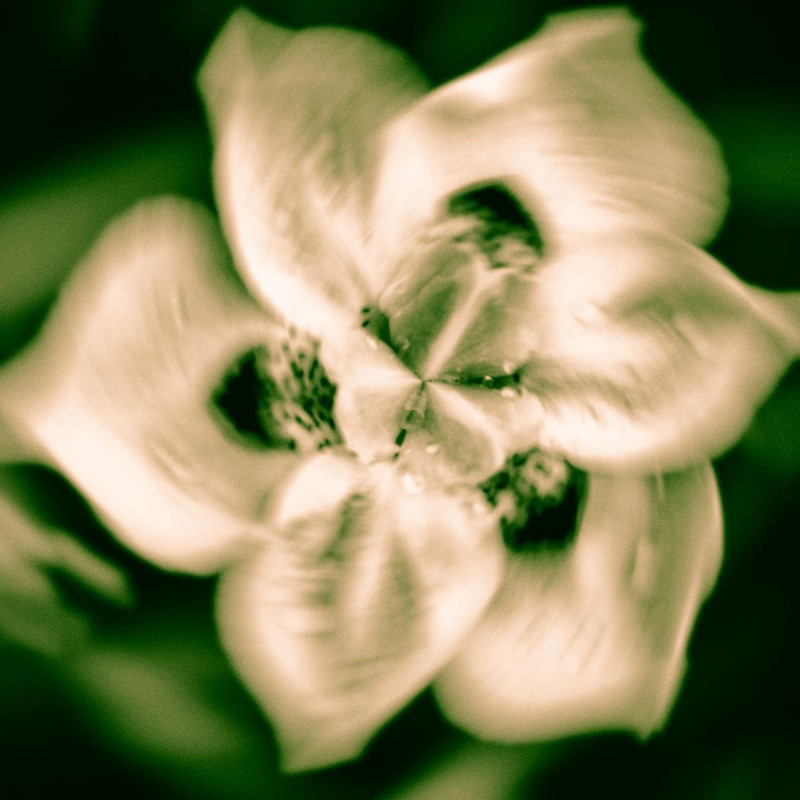 Spinning Flower 1