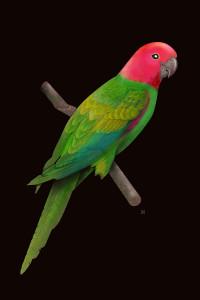 Colourful Parrot 2
