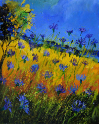 Blue Cornflowers 5661