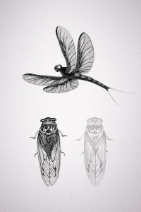 Insect Study 1