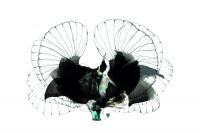 Riflebird