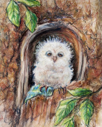 """Sleepy Little Owl...Close Your Eyes"""