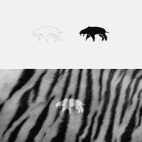 Square Tiger