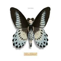 Blue Mormon - Insects Re-Imagined