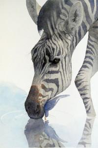 Zebra Drink Water